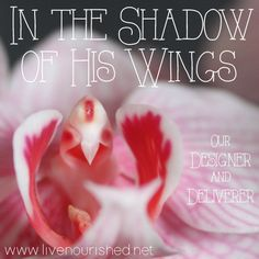 In The Shadow Of His Wings: Our Designer and Deliverer -- Our God is the ultimate Designer, and our only Deliverer. All who trust Him will find delight and deliverance in the shadow of His wings… -- LiveNourished.net