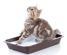 Katzentoilette mit Sieb – Einfach zu säubern und spart Katzenstreu Cat Lover, Pets, Woodworking, Animals, Cat Behavior, Cat Art, Simple, Animales, Animaux