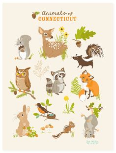 POSTER Backyard animals of Connecticut by SeaUrchinStudio on Etsy