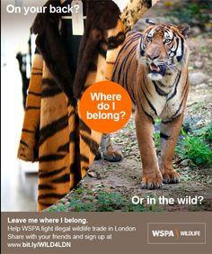 WSPA ondersteunt de Londense Wildlife Crime Unit om de handel in illegale producten van wilde dieren te stoppen. Wil je ons helpen in deze strijd? Repin deze foto dan op je eigen board.