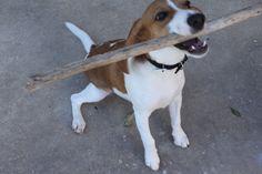Leo playing fetch!