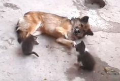 Mother Cat Brings Her Kittens To Meet An Unlikely Old Friend
