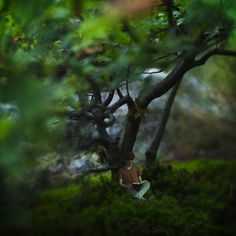 Teenager Splices Portrait and Macro Photos into Miniature Fantasy World