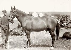 Here is Comanche, who was the only survivor of the Battle of Little Bighorn June 25, 1876. He is only one of two horses ever to be buried with full miliatry honors (the other being Black Jack in 1976).