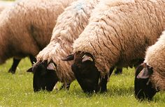 Look for the Animal Welfare Approved (AWA) Certified Grassfed label! Animal Welfare Approved Winrock International