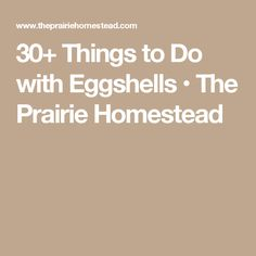 30+ Things to Do with Eggshells • The Prairie Homestead