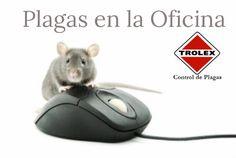 Por qué se Necesita Control de Plagas en la Oficina - Trolex  La Presencia de Plagas en la Oficina puede Causar una Imagen Negativa a su Negocio.