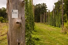 Growing Beer: A Visit to Farm Boy Farms' Hops & Grain Farm in North Carolina Fall Projects, Home Projects, Hops Trellis, Trellis Design, Trellis Ideas, Provence Style, Farm Boys, Beer Garden, Home Brewing