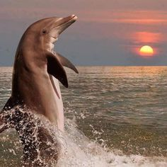 Dolphins are so beautiful, I really liked this photo! Water Animals, Animals And Pets, Smart Animals, Beautiful Creatures, Animals Beautiful, Dolphin Photos, Fauna Marina, Life Under The Sea, Underwater Life