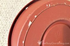 To Get Rid Of Mealybugs - clean the soil surface, the pot, the plate it's resting on, and the shelf/table that it's on. Plant Bugs, Plant Pests, Garden Pests, White Bugs On Plants, Terrarium, Mealy Bugs, Potting Soil, Plant Care, How To Get Rid