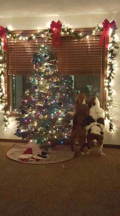 I think I see Santa!