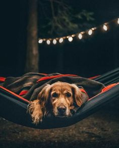 Photo of @milliethegolden shot by @fursty #ourcamplife