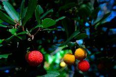 De la Naturaleza a la mesa | SoyRural.es