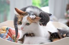 Kitty With a Cat - 41 Pictures