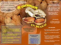 Actualmente, #México tiene una producción de #cacahuate por arriba de las 7 mil toneladas.