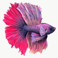 Purple and pink betta fish design element  | premium image by rawpixel.com / Te Aggressive Animals, Pixel Image, Fish Logo, Best Stocks, Fish Design, Betta Fish, Fish Tank, Royalty Free Photos, Wallpaper Backgrounds