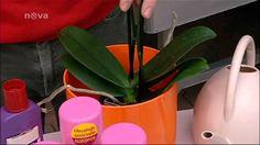 videa jak na orchydeje Planter Pots, Flora, Gardening, Youtube, Plants, Creative, Lawn And Garden, Plant, Youtubers