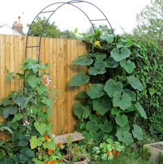 How To Build a Squash Arch