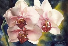 pink phalaenopsis orchid by Alfred Ng Orchids Painting, Watercolour Painting, Watercolor Flowers, Watercolors, Pink Orchids, Phalaenopsis Orchid, Master Of Fine Arts, Learn To Paint, Paintings For Sale