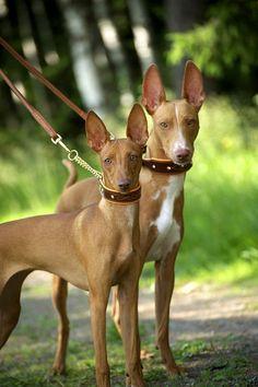 Feel Bling puolikiristävä pehmeä panta, jossa näyttävä tikkaus ja koristekiviä. / Feel Bling soft dog collar with rhinestones.