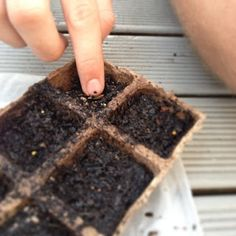 The easy way to grow your own plants from seed!