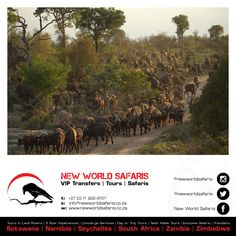 New World Safaris ------------------ VIP Transfers   Tours   Safaris ------ Follow us on Facebook facebook.com/newworldsafaris African Buffalo, Travel Tours, Seychelles, Day Trip, Vip, South Africa, Safari, Photographs, Wildlife
