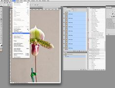 How to Stack Photos in photoshop to create a greater depth of field