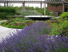 This image is a detail show of the garden's central fountain. The water rolls off the stainless steel basin's edge creating a soothing subtle noise. The long-blooming herbs planted in the enclosing beds make for a brilliant outdoor room. Photo credit: Oasis Design Group, Jane Luce.