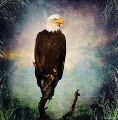 The Secret Photograph by Jordan Blackstone - The Secret Fine Art Prints and Posters for Sale #art #jordanblackstone #eagles