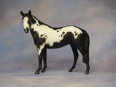Custom Breyer Stablemate G1 Native Dancer to Pinto Sport Horse +++by L. Elkjer