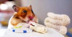 One Hungry Hamster Enjoys Some Fine Dining! So Cute! - Cute Videos