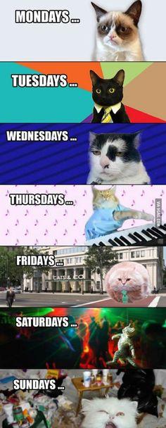 Week Described In Cat Faces