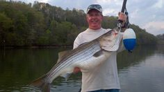 Striper Fish, Visit Tennessee, Fishing Guide, Jay, Outdoors, Spaces, Beauty, Outdoor Rooms, Beauty Illustration