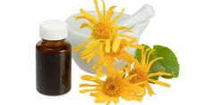 Arnica Oil is considered as one of the best oils to prevent hair loss. An excellent anti-inflammatory agent, arnica oil is also known for its antioxidant properties that enrich the scalp and protect hair from damage. Best Oils, Best Essential Oils, Headache Remedies, Herbal Remedies, Psoriasis Remedies, Arnica Planta, Natural Treatments, Natural Cures, Natural Oil