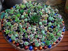 Plantando suculentas