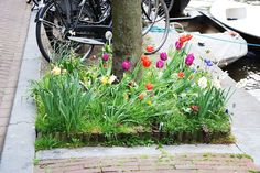 Guerilla Gardening in Amsterdam. Visit the slowottawa.ca boards:  http://www.pinterest.com/slowottawa/