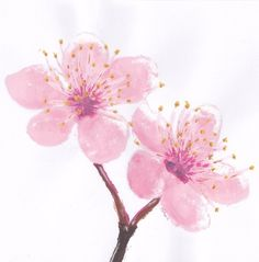 Possible sister tattoo, with one more flower