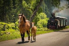 From Transylvania. Mustangs, Romania Travel, Romania Tours, Visit Romania, Everything Country, Dream Images, World View, Manet, Show Horses