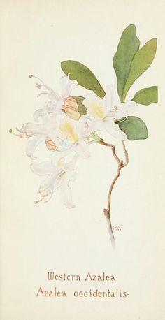 Field book of western wild flowers - Google zoeken