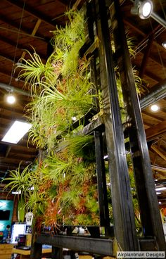 Airplantframe by Josh Rosen  www.airplantman.com  www.facebook.com/Airplantman