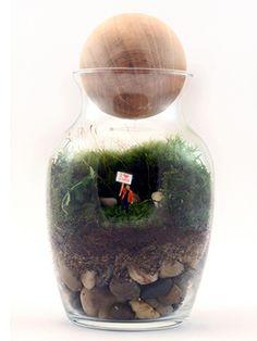 Cute terrarium #ValentinesDay #giftguide