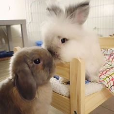 Everything you need to know about bunnies. Bunny kisses, bunny rabbit, bunny ears, bunny nose, bunny butt, bunny and people, bunny and kids, two bunnies, bunny love #AnimalsandPets