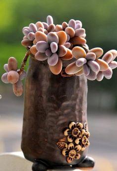 高さのある焼き物で茎を生かす仕立て方