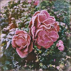 pupsik11:  pupsik11iphone:  Für Nataliya  Die my Sweetheart