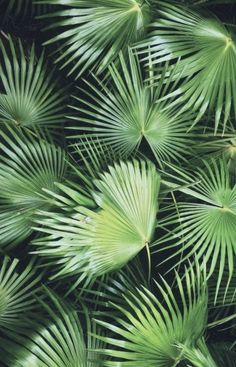 palm leaves | plant aesthetic