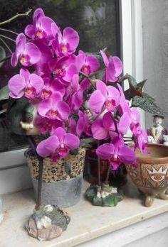 orchidej v Německu (70 pieces) Jigsaw Puzzles, Plants, Puzzle Games, Plant, Puzzles, Planets