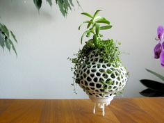 Plant+Space+Rocket+by+graph.