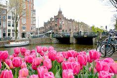 Amsterdam - love tulips! www.aruralchiclifestyle.com Amsterdam Travel, Tulips, Holland, Tulip