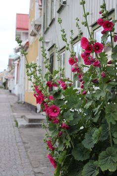 Gränna -min hemstad  Foto : Pernilla.N Piazzan
