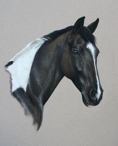 Equine art by Heather Irvine